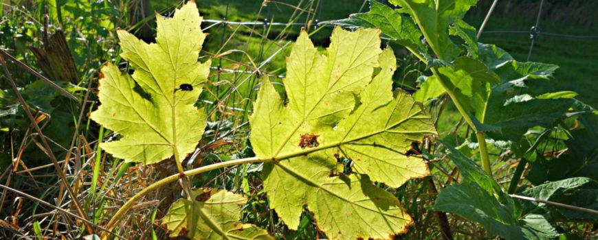 tree-nature-plant-sunlight-texture-leaf-551666-pxhere.com