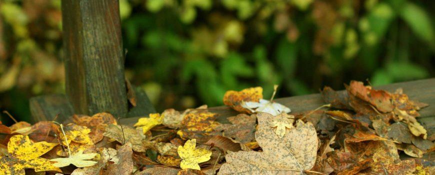 autumn-2364783_1920