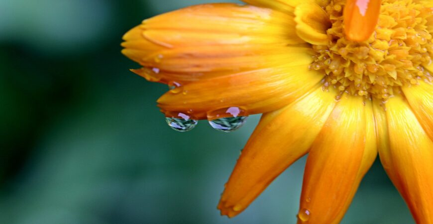 marigold-1568620_1920_copy_1920x1080_1